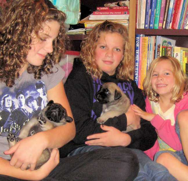 Breanna, Megan and Jenna (Compton girls) with the Mastiff puppies